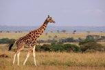 Safari - Afryka