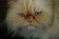 koty - płótno